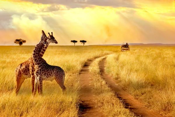 1 ROMANTICO SUDAFRICA
